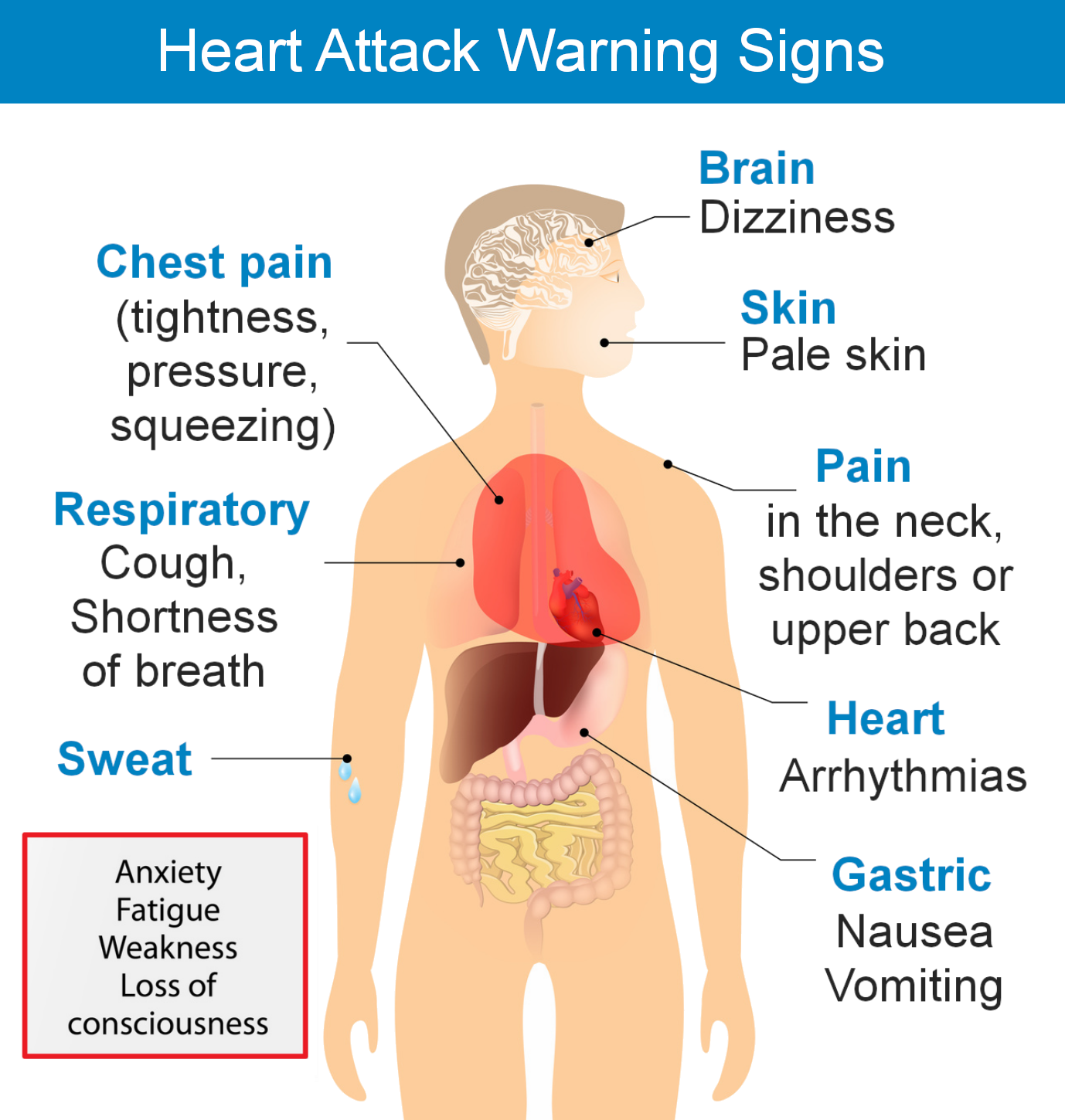 heart attack, heart attack symptoms, heart attack warning signs and care, heart attack warning signs